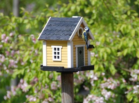 A birdsnest with a bird feeding his nestlings in the nesting box