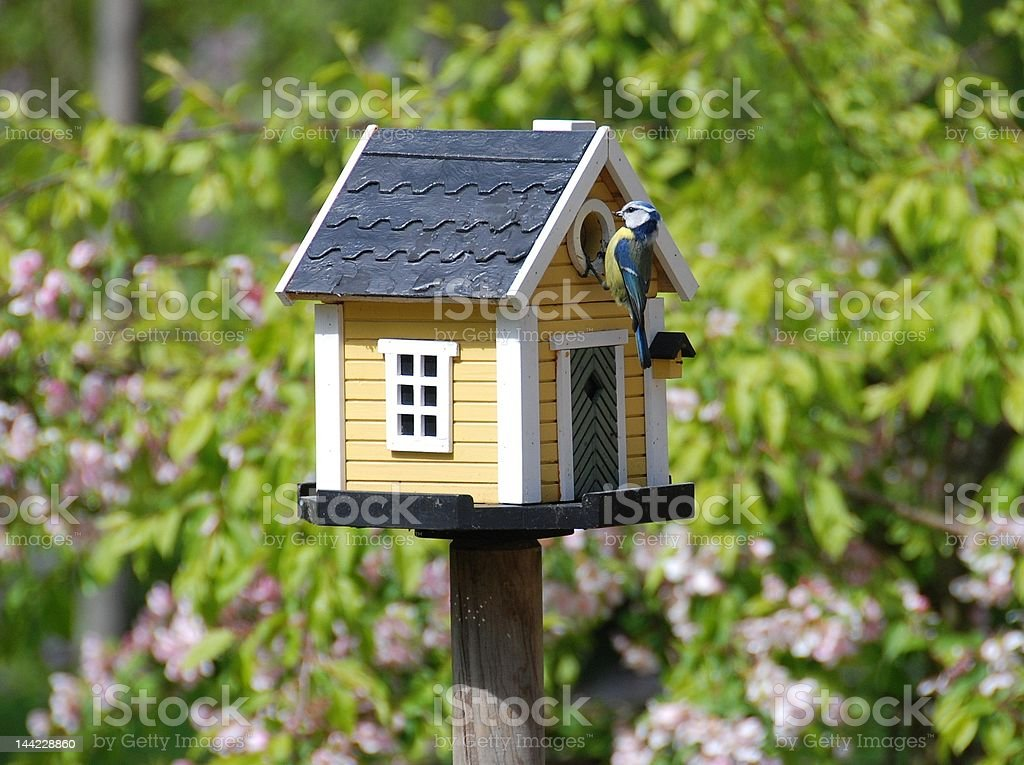 Birdsnest with bird feeding stock photo