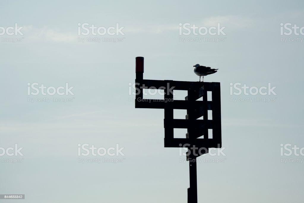 Birdwatch stock photo