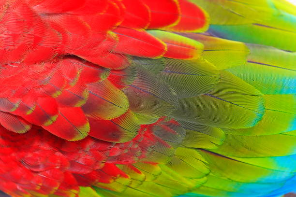 birdwatch safari:  blue, green and scarlet parrot macaw tropical bird, wing feathers pattern textured - piume colorate foto e immagini stock