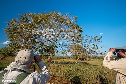 A birdwatcher and tour guide looking for birds through binoculars in the Pantanal in Mato Grosso State, Brazil