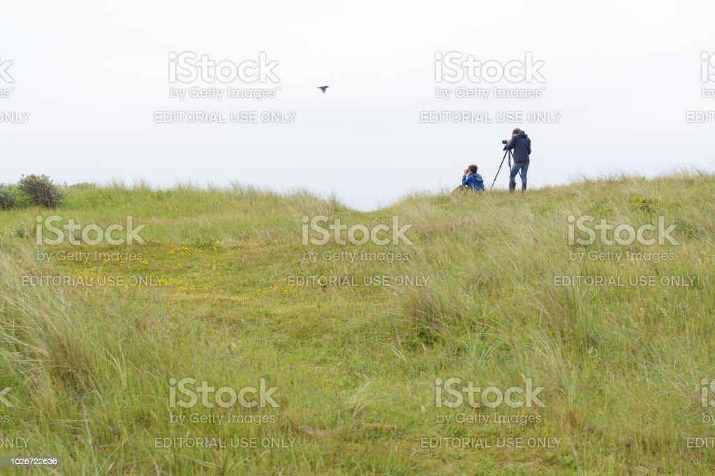 Vogelbeobachtung auf niederländischen Watteninseln – Foto