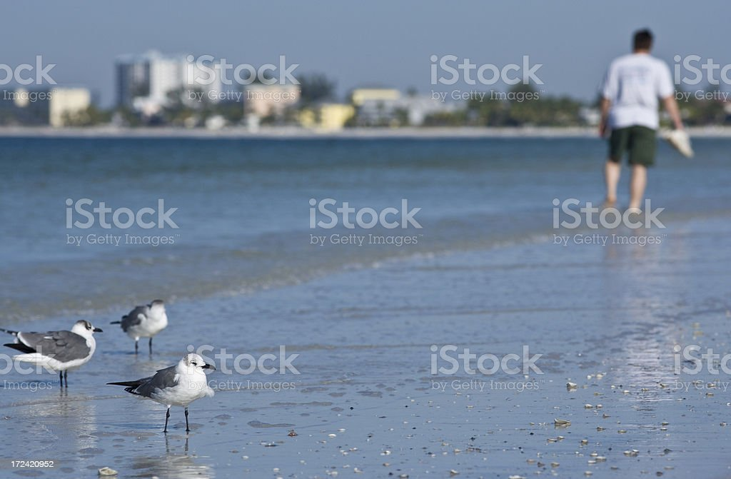 Birdwatching stock photo