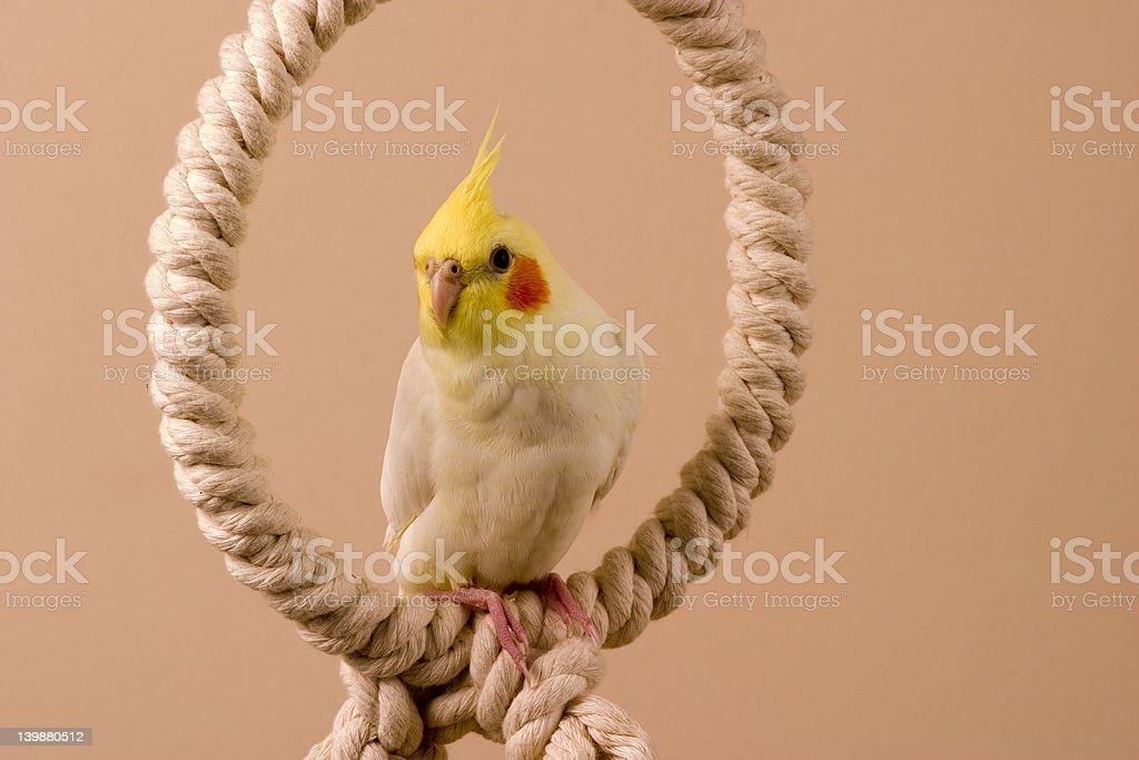 Birdy 5 stock photo