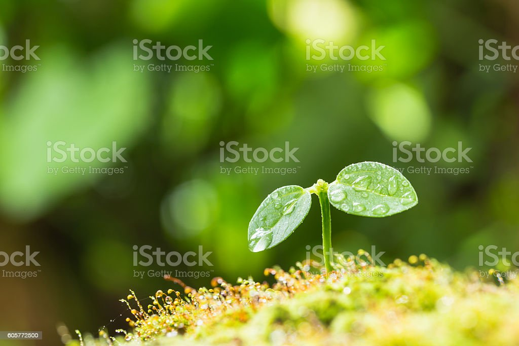 Birth and water droplets of Futaba stock photo