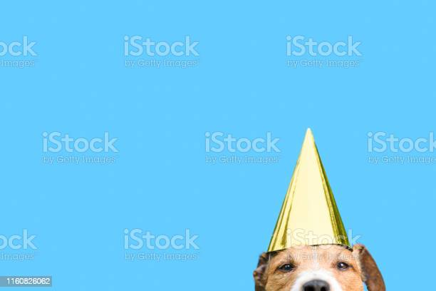 Birthday and celebrations concept with dog wearing golden party hat picture id1160826062?b=1&k=6&m=1160826062&s=612x612&h=8qfalczupqi9saebexoopew0u v8kqda4kdopzaaqu0=
