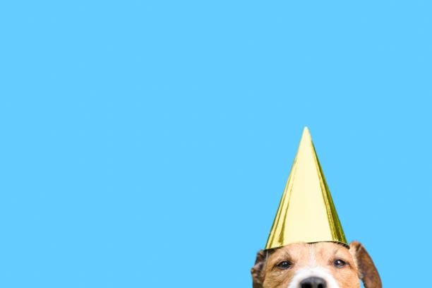 Verjaardag en vieringen concept met hond dragen gouden partij hoed foto