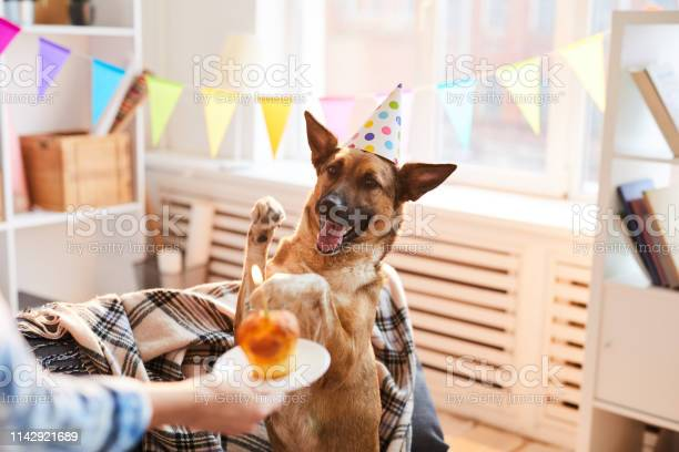 Birthday cake for dog picture id1142921689?b=1&k=6&m=1142921689&s=612x612&h=euwxa3qou kqgqbcjzkf3iynclarkfhzdtunc6gytya=