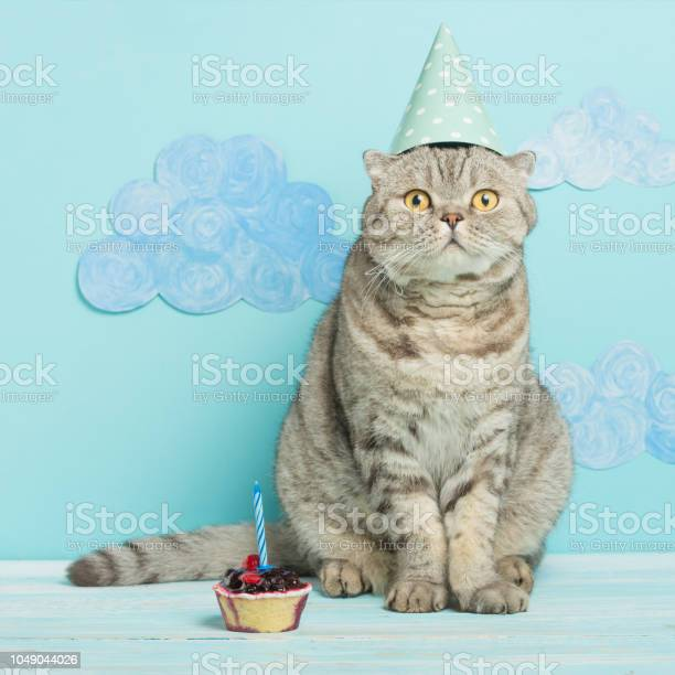 Birthday cat congratulations on the holiday picture id1049044026?b=1&k=6&m=1049044026&s=612x612&h=nzixjyps6hvoj49hooyyloynxp6hqxswensh9ky5zsg=