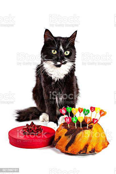 Birthday cat picture id501366191?b=1&k=6&m=501366191&s=612x612&h=o cghptc6phbncusru5c nqtk  ug7tfdls8vnqshug=