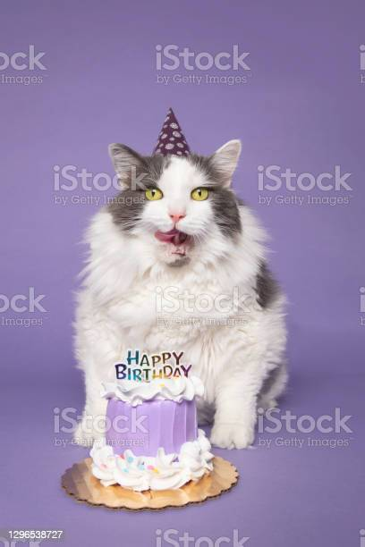 Birthday Cat Ready For Cake Stock Photo - Download Image Now