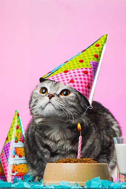 Birthday Cats Stock Photo