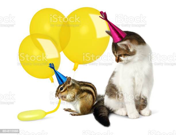 Photo of Birthday concept, funny cat and chipmunk with balloons on white
