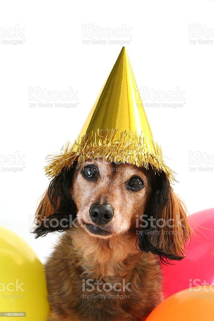 Birthday dog royalty-free stock photo