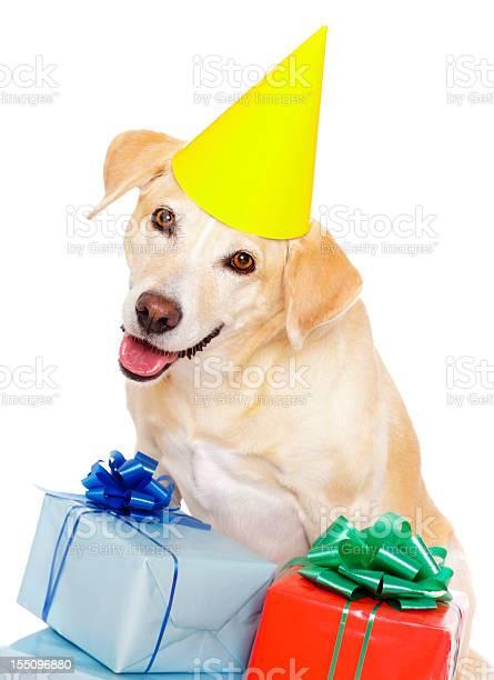 Birthday dog picture id155096880?b=1&k=6&m=155096880&s=612x612&h=fr7 80x 3ud ww4x9xcaymsllztou3u7mrozjhfuvgk=