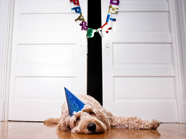 birthday dog - kellyjhall stock pictures, royalty-free photos & images