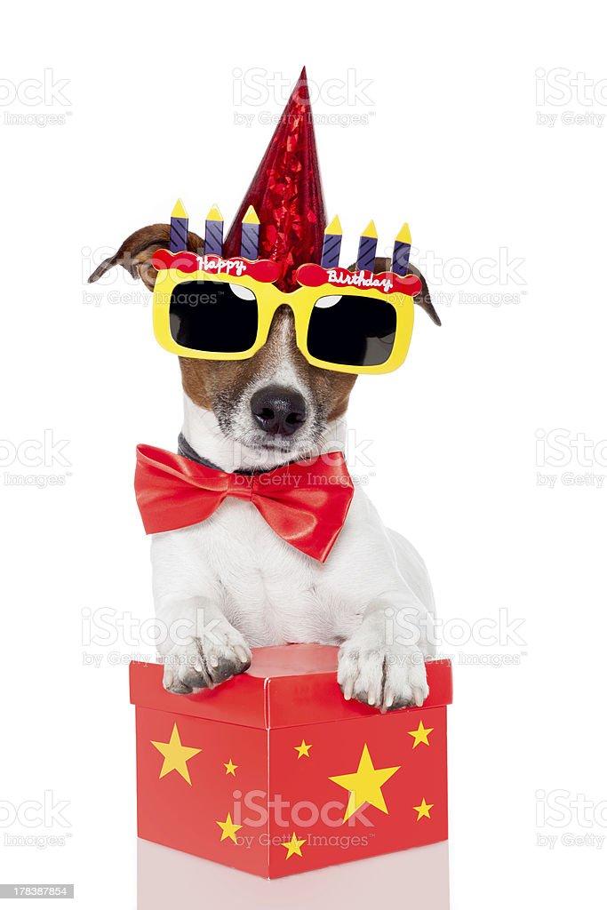 Geburtstag Hund Stock Fotografie Und Mehr Bilder Von Brille Istock