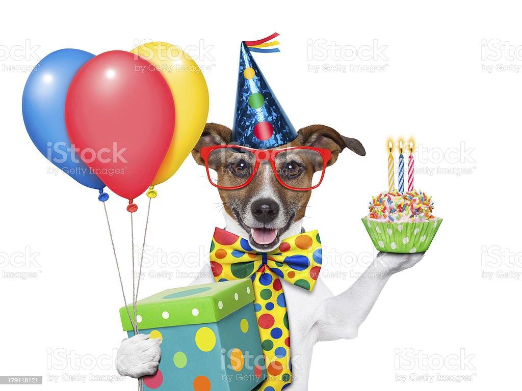 birthday dog stock photo