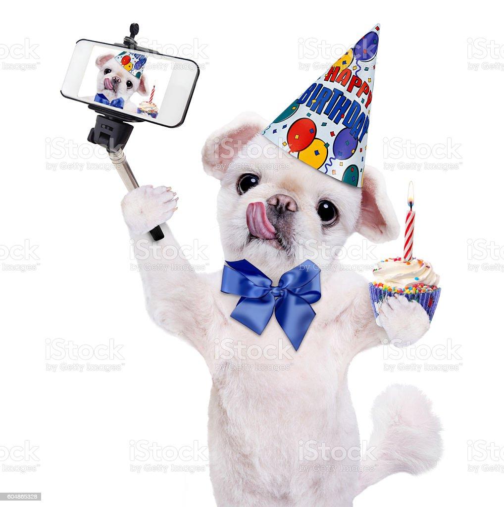 Birthday Dog Taking A Selfie Together With Smartphone Lizenzfreies Stock Foto