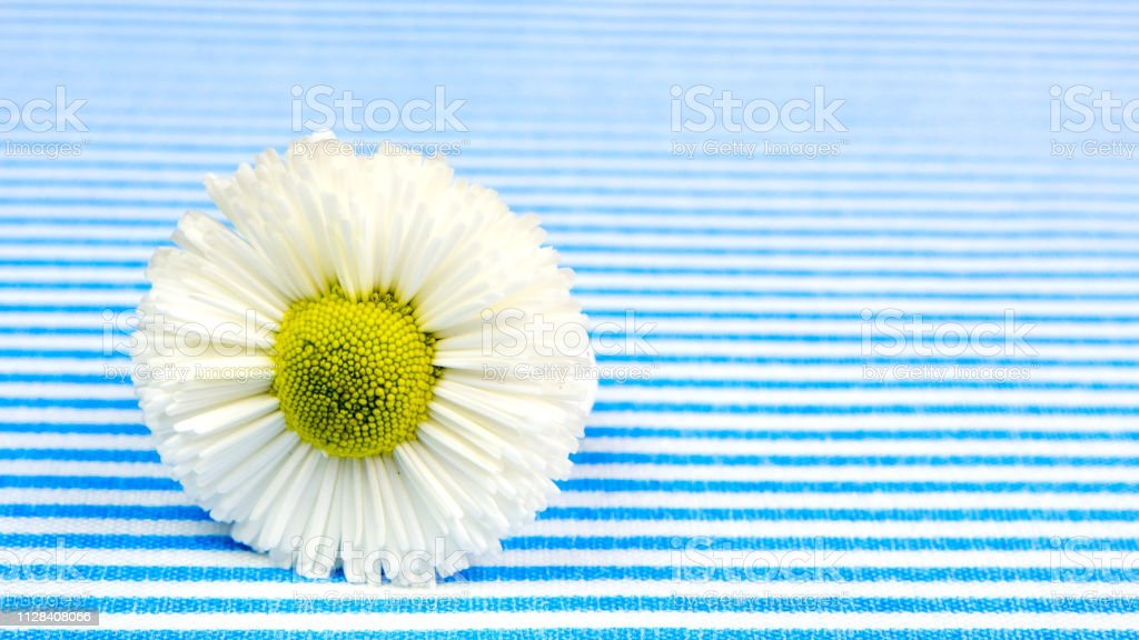gift card with blue and white lines background with one white flower...
