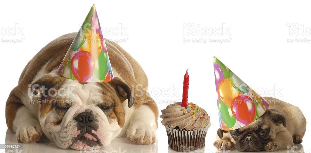 Geburtstag Party Tiere Stock Fotografie Und Mehr Bilder Von Cupcake