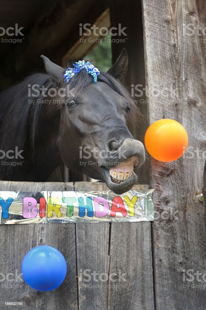 Birthday Party Horse Portrait, Toothy Grin stock photo