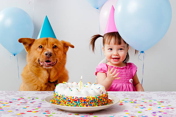 Birthday party with pet stock photo