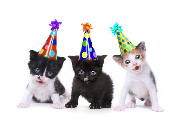 Birthday song singing kittens on white background picture id675491006?b=1&k=6&m=675491006&s=612x612&w=0&h=hdegfylcfqpuwkt shrqouzjenvzwshmutlatxktlou=