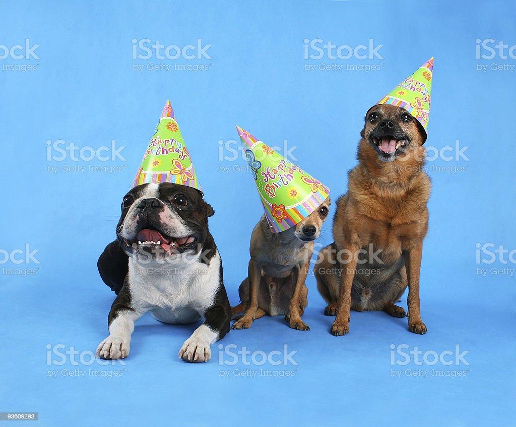 birthday trio royalty-free stock photo