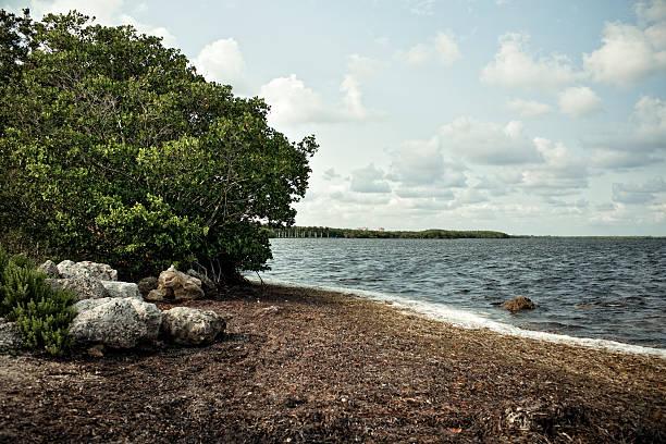 parque nacional de biscayne no sul da flórida, eua - estuário imagens e fotografias de stock