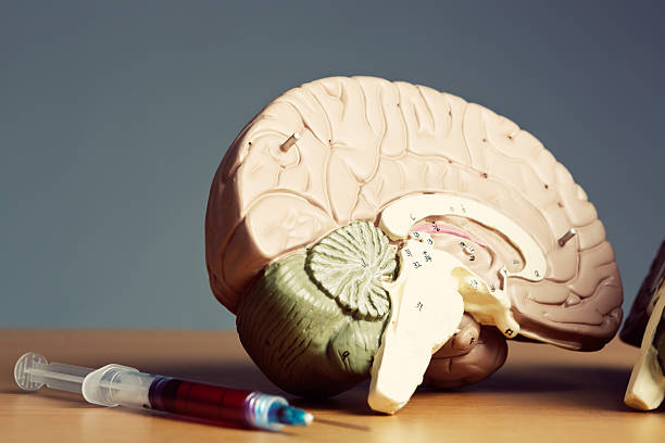 Bisected model brain with blood-filled hypodermic stock photo