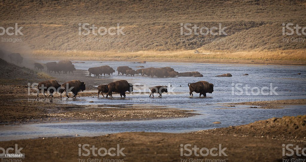 Bison-Fluss – Foto