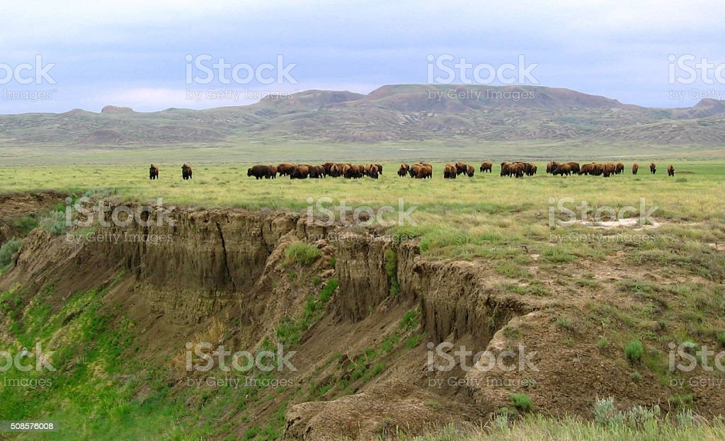 Bison Range the Open Badlands and Grasslands stock photo