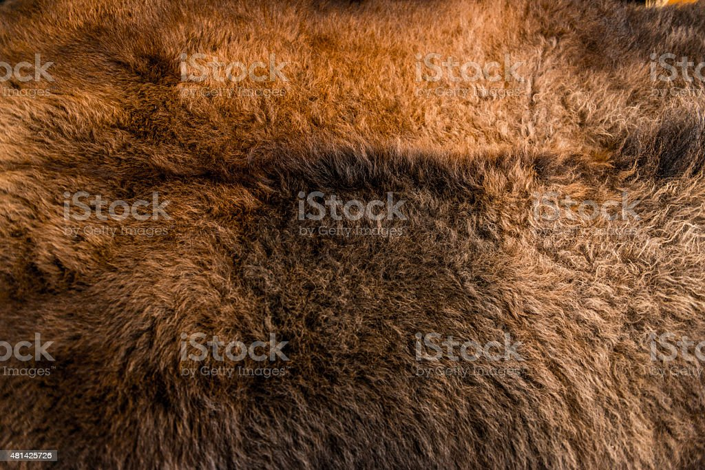 Bison's Hide stock photo