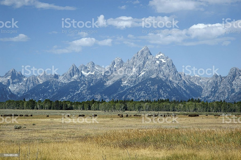 Bisons in the Grand Tetons royalty-free stock photo