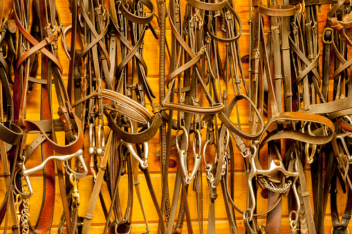 Bits And Bridles On The Wall Of The Tack Room Stock Photo
