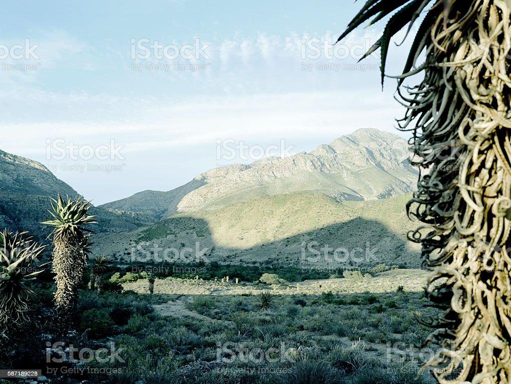Bitter Aloes Gamkaskloof Karoo South Africa stock photo