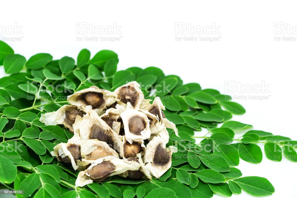 Bitter cucumber-chinese (Moringa oleifera Lam.) stock photo