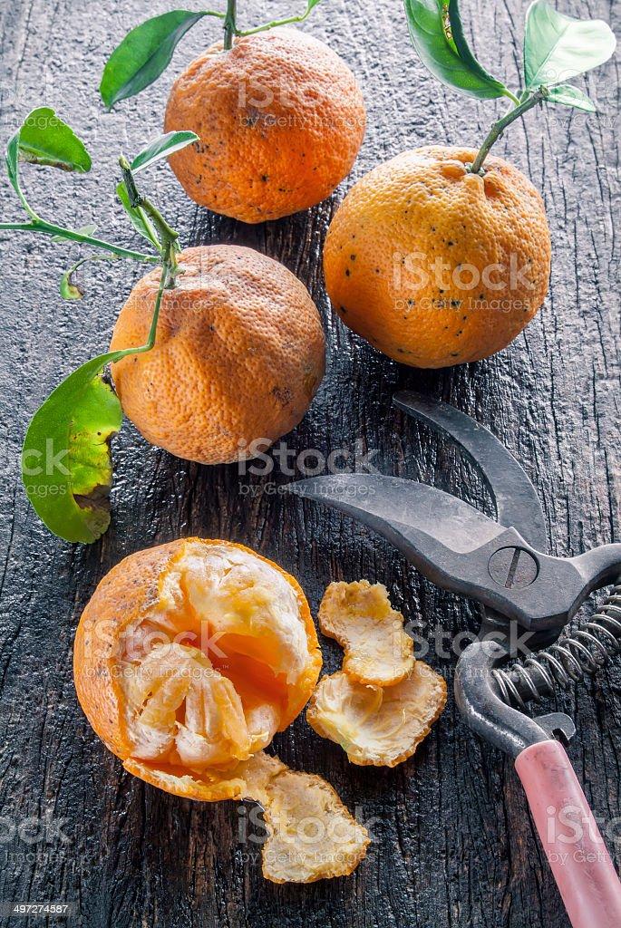 Bitter Oranges stock photo