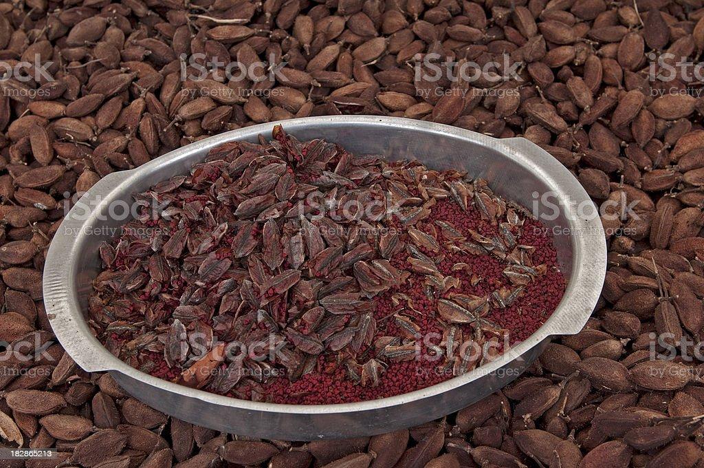 Bixa Orellana urucum rainforest seeds royalty-free stock photo