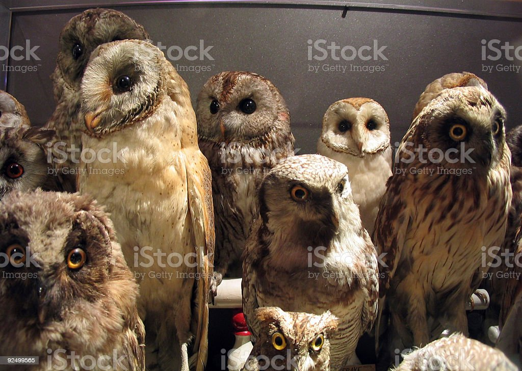 Bizarre owls royalty-free stock photo