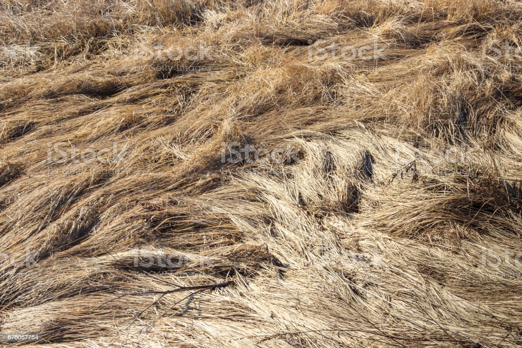 A bizarre pattern painted a snow of last year's crushed yellow grass stock photo