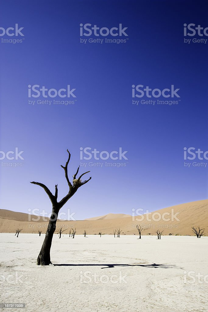 Bizarre Trees Dead Vlei Namibia royalty-free stock photo