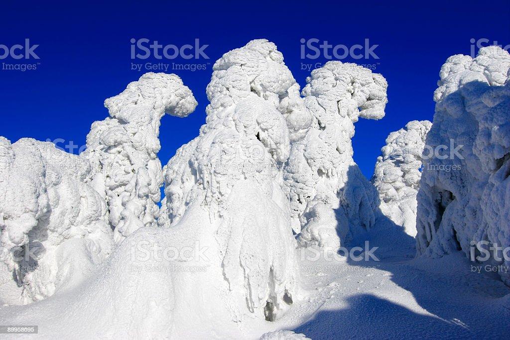 Bizarre Winter Forest II royalty-free stock photo