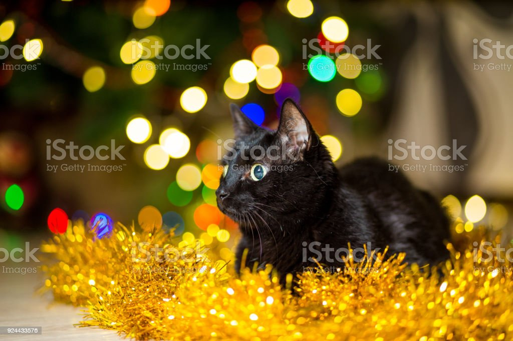 black adult cat near a christmas tree with garlands royalty free stock photo
