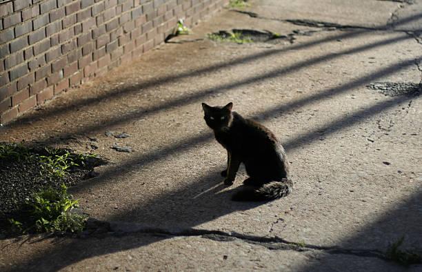 Black alley cat picture id90881866?b=1&k=6&m=90881866&s=612x612&w=0&h=0xjh4nwind8qjkfydtmvs4izj8ntc9oxejrvycncriw=