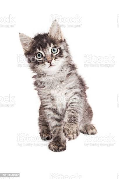 Black and grey tabby kitten raising paw picture id531964802?b=1&k=6&m=531964802&s=612x612&h=t2zzsbay4irvp1rkxtzvdenmlsuhdxim cmn63urljy=