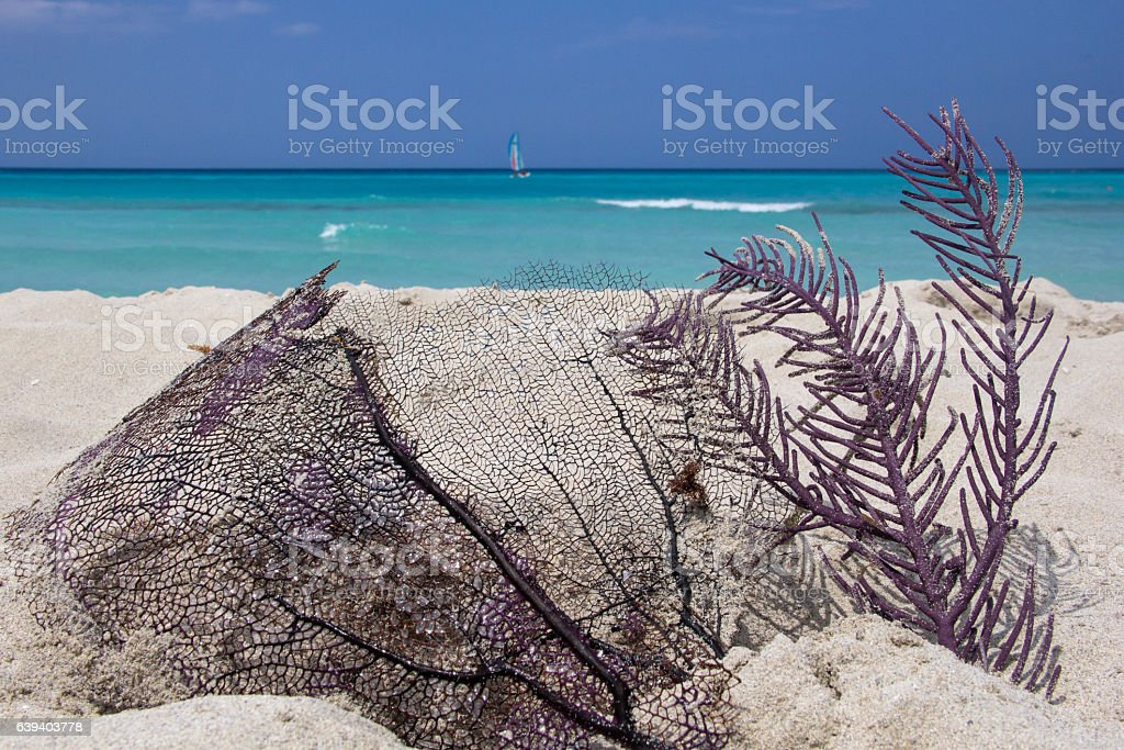 Black and purple dead Coral in paradisiac Cuban  beach stock photo