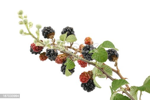 istock Black and red blackberries 187033994