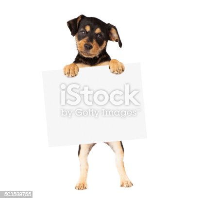 istock Black and Tan Puppy Holding Blank Sign 503569755